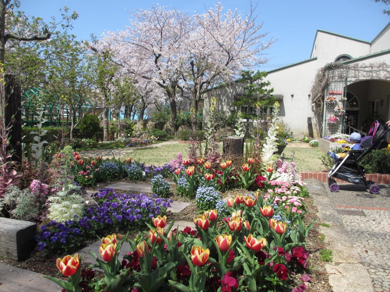4月の花壇とソメイヨシノ
