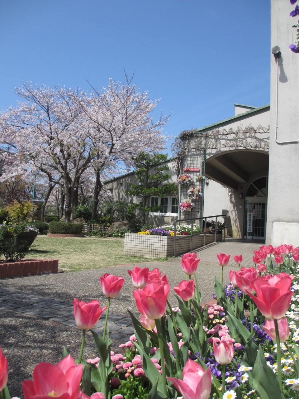 4月の芝生コーナー